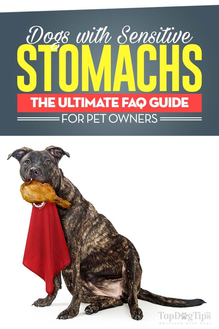 Dogs with sensitive stomachs what pet owners must know