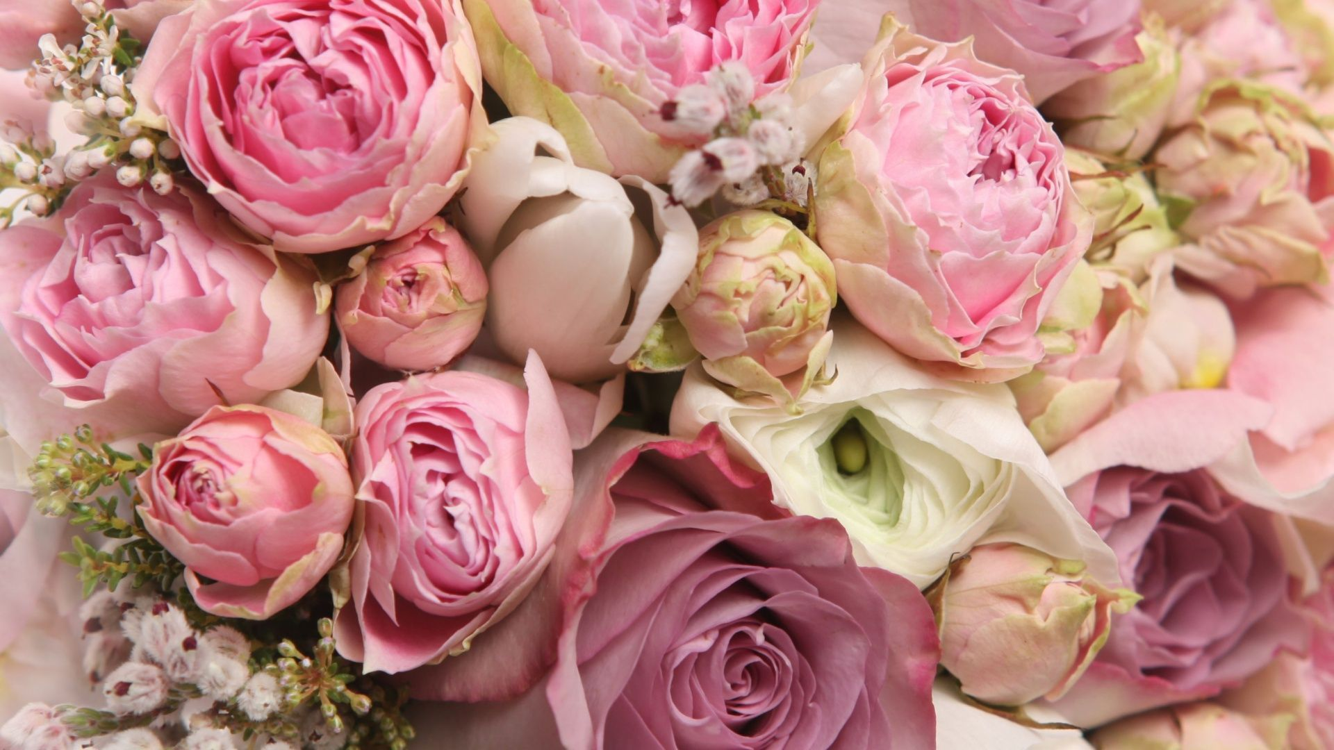 flowers for > pink peony wallpaper | flower power | pinterest