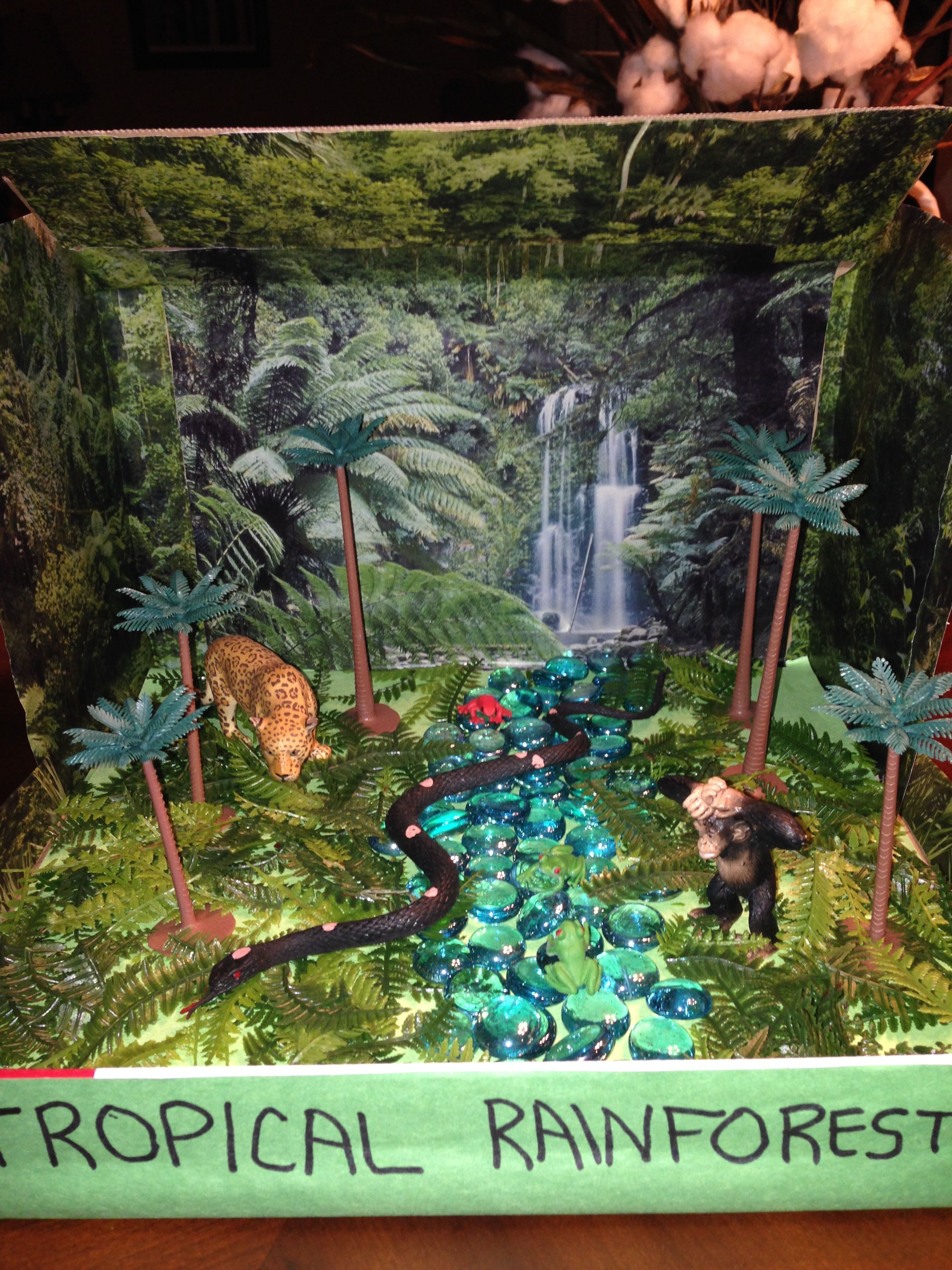 Rainforest Biome In A Box Dioramaideas Rainforest Biome