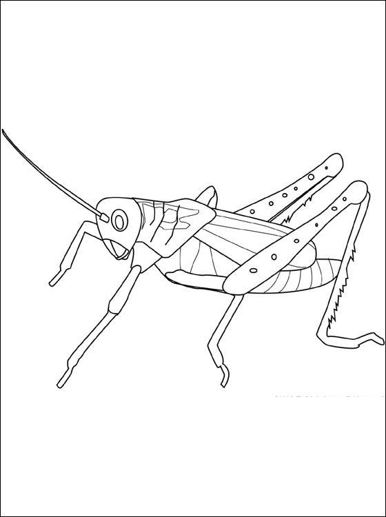Coloriage et dessin sauterelle imprimer coloriage - Sauterelle dessin ...