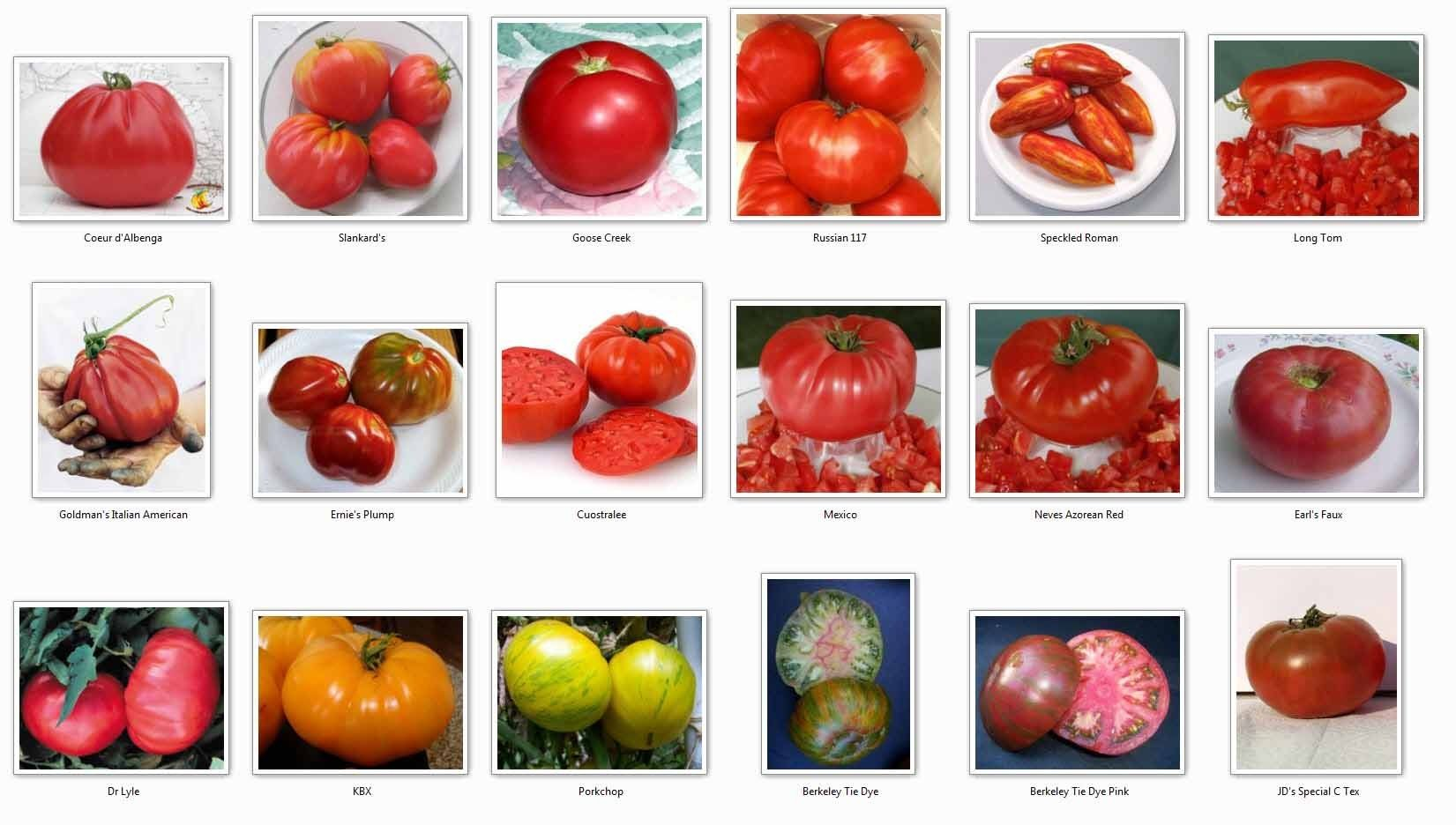Tomato Variety Types Of Tomatoes Types Of Potatoes Tomato