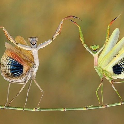 romantic insects