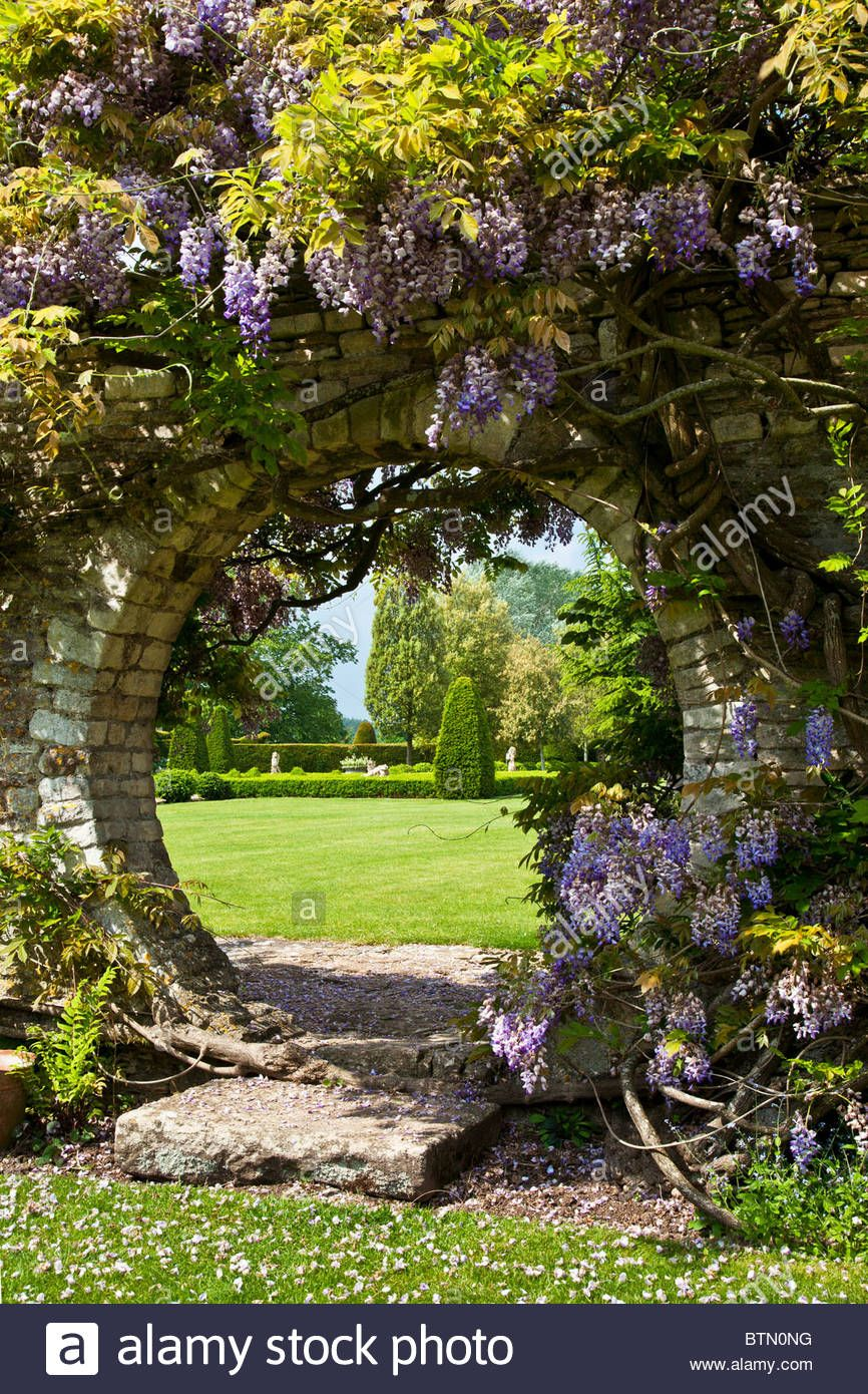 Wisteria Growing Over A Circular Opening In A Garden Wall