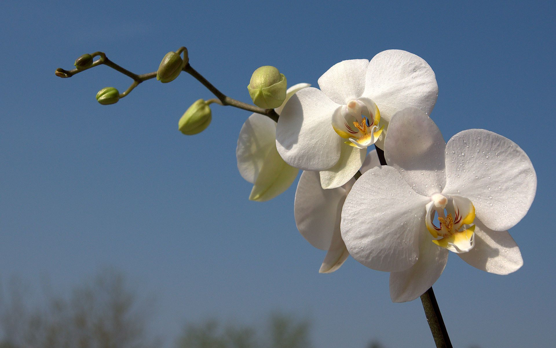 56 White Orchid Wallpapers On Wallpaperplay Orchid Wallpaper Orchids Painting Orchids