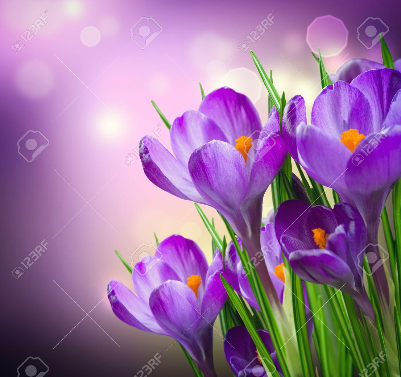 весенние цветы иллюстрации - Поиск в Google | Весенние ...