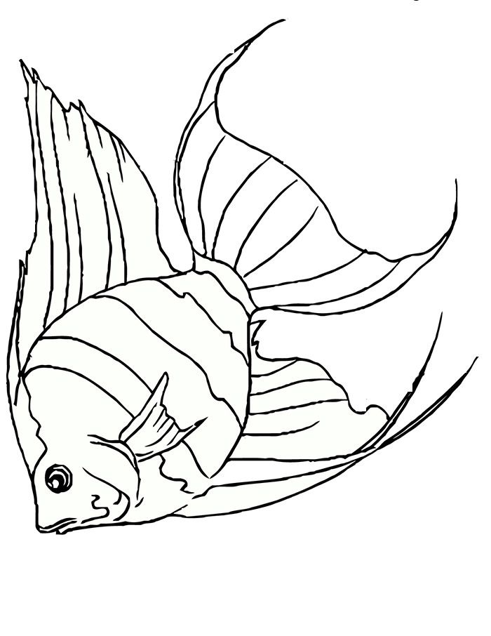 photo regarding Free Printable Sea Creature Templates referred to as 65+ Sea Creature Templates - Printable Crafts Colouring