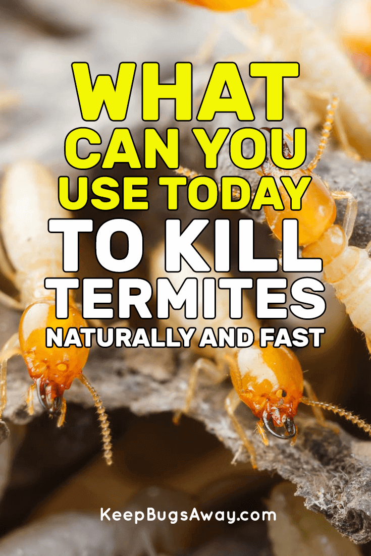 What Kills Termites Top 5 Things You Can Use To Kill Termites Termite Control Termites Termite Prevention