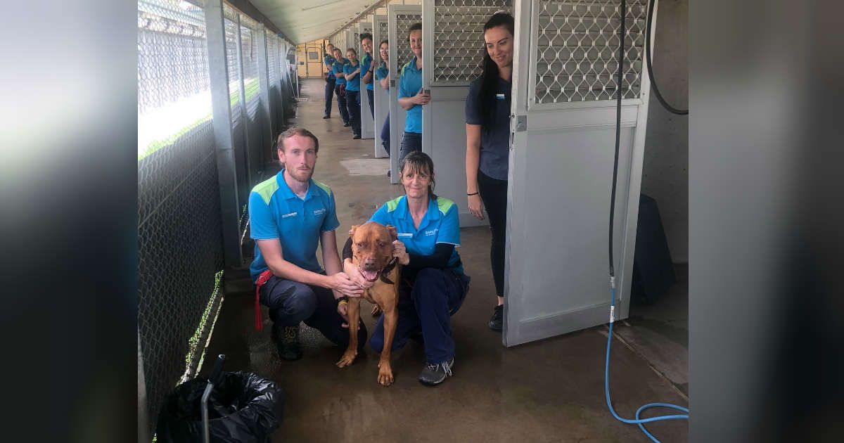 Every Single Dog Was Adopted From This Shelter Except One In 2020 Amazing Animal Stories Big Smile Guys