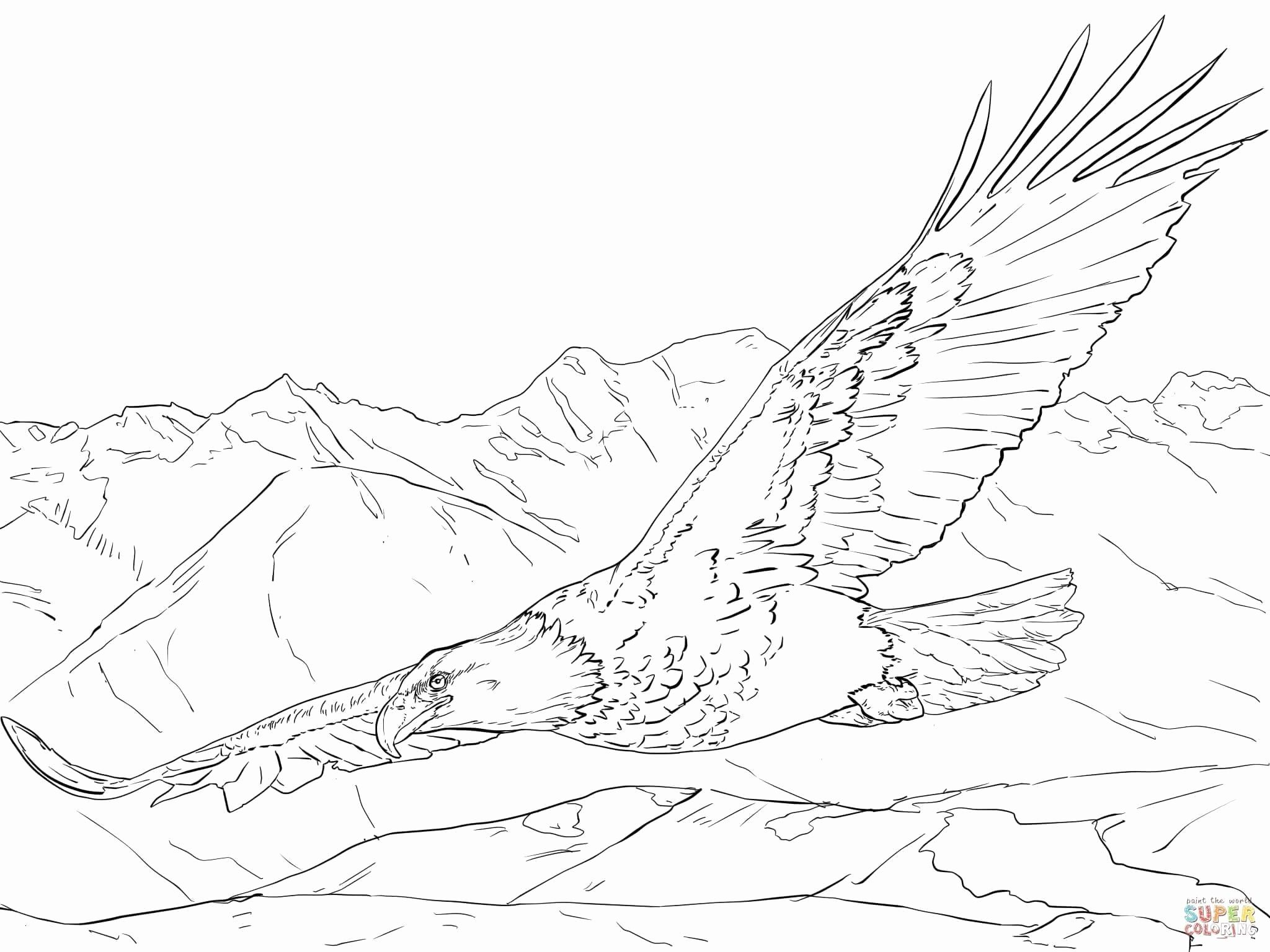 Bird Nest Coloring Pages Awesome Bald Eagle Coloring Page
