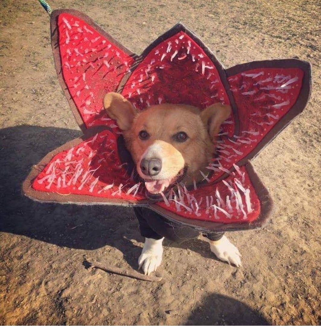 Demogorgon Costume For Pets Pet Halloween Costumes Stranger