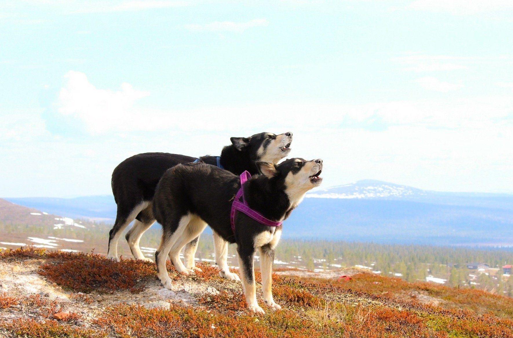 Hurtta Casual Padded Dog Harness Padded Dog Harness Dog Harness