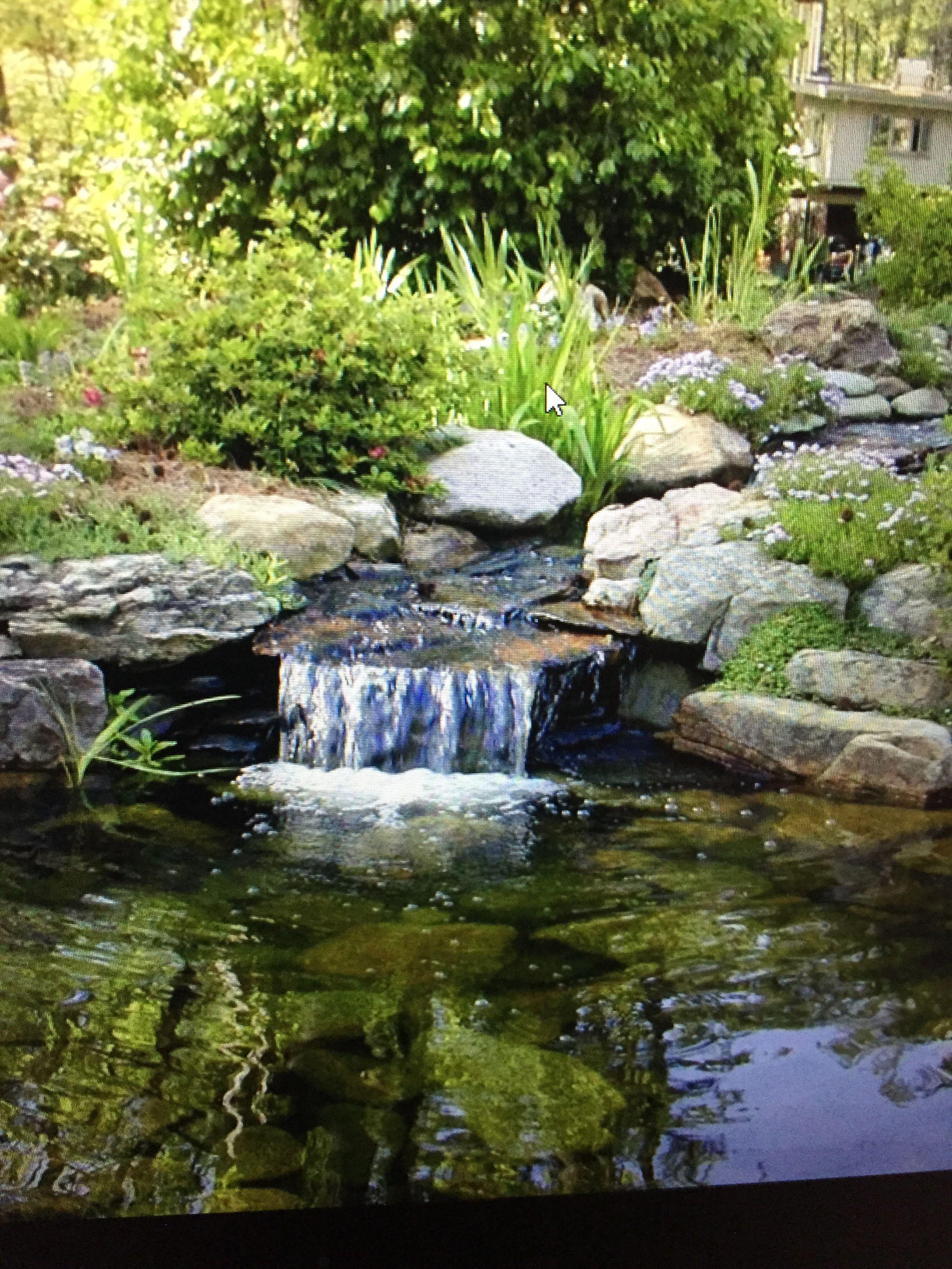 Future Pond