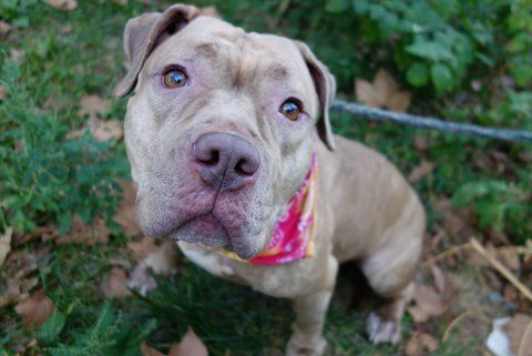 Fausta A1091635 Manhattan Please Share To Be Destroyed 10 10 16 A Volunteer Writes So Sweet So Shy This Little G Animals Dog Adoption Animals Friends