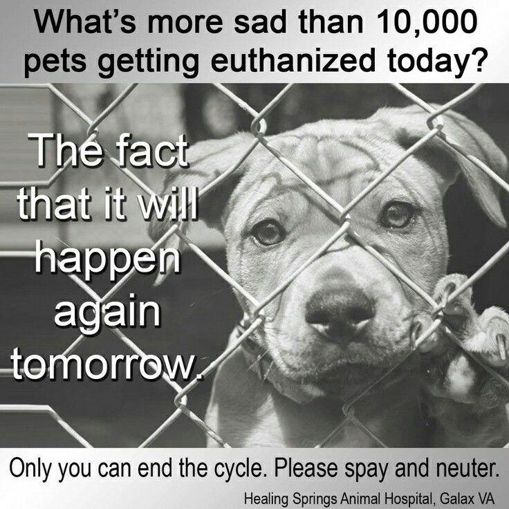Dont shop please adopt a pet save a life animal
