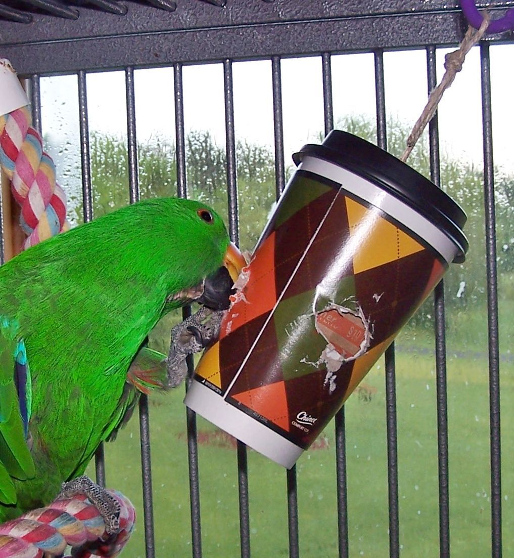 A Chinet Comfort Cup Made Into A Parrot Foraging Toy Parrots Parrot Toys Foraging Bird Toys Parrot Pet