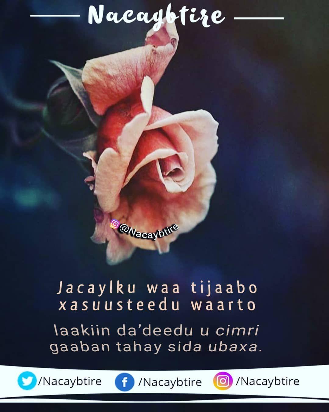 Jacaylku Waa Tijaabo #Jacayl #Ubax #Flower #Xikmad
