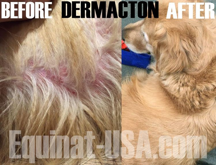 Dermacton Reviews Dog Skin Allergies Hair Loss Itchy Dog