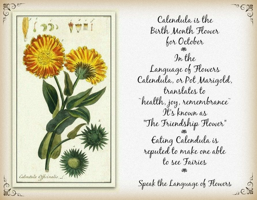 Pin by Olivia Sotelo on Tree Plant & Earth ️ Birth month