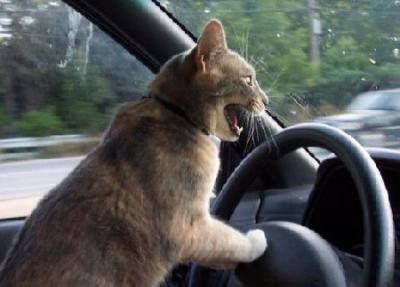 Be careful out there on the roads with all of those crazy drivers out there!!! =^..^=