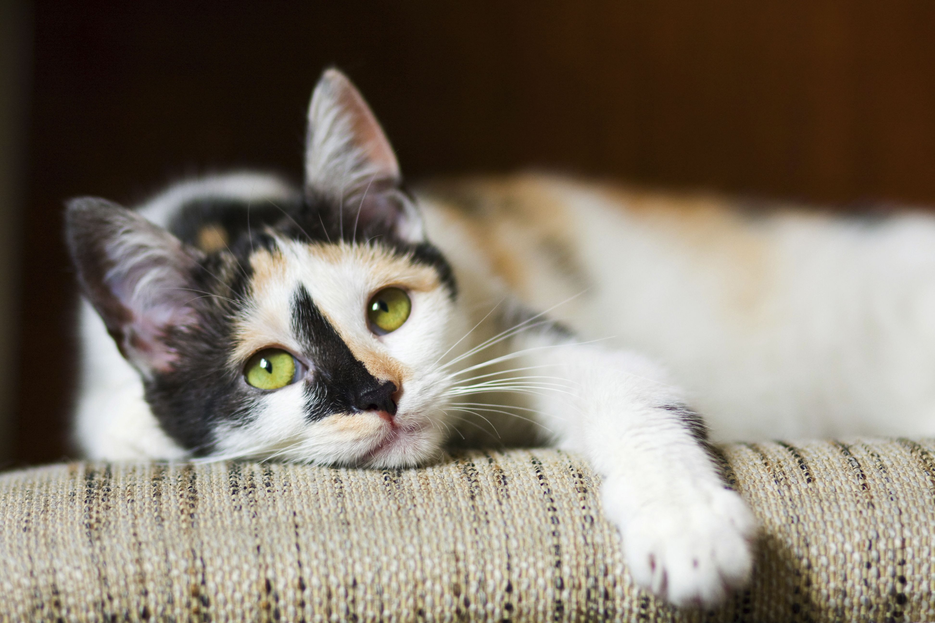 The Brown family cat, Gretel. Cat allergies, Cats, Cat
