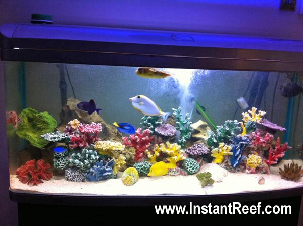 Image detail for large marine aquarium 60 gallon large for Saltwater fish for small tank