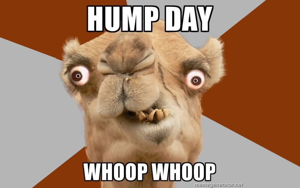 28 Funniest Happy Hump Day Memes That Makes You Fun Funny Hump Day Memes Funny Happy Happy Hump Day Meme