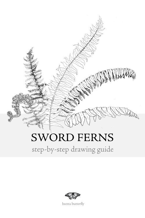 step-by-step drawing guides — bretta butterfly