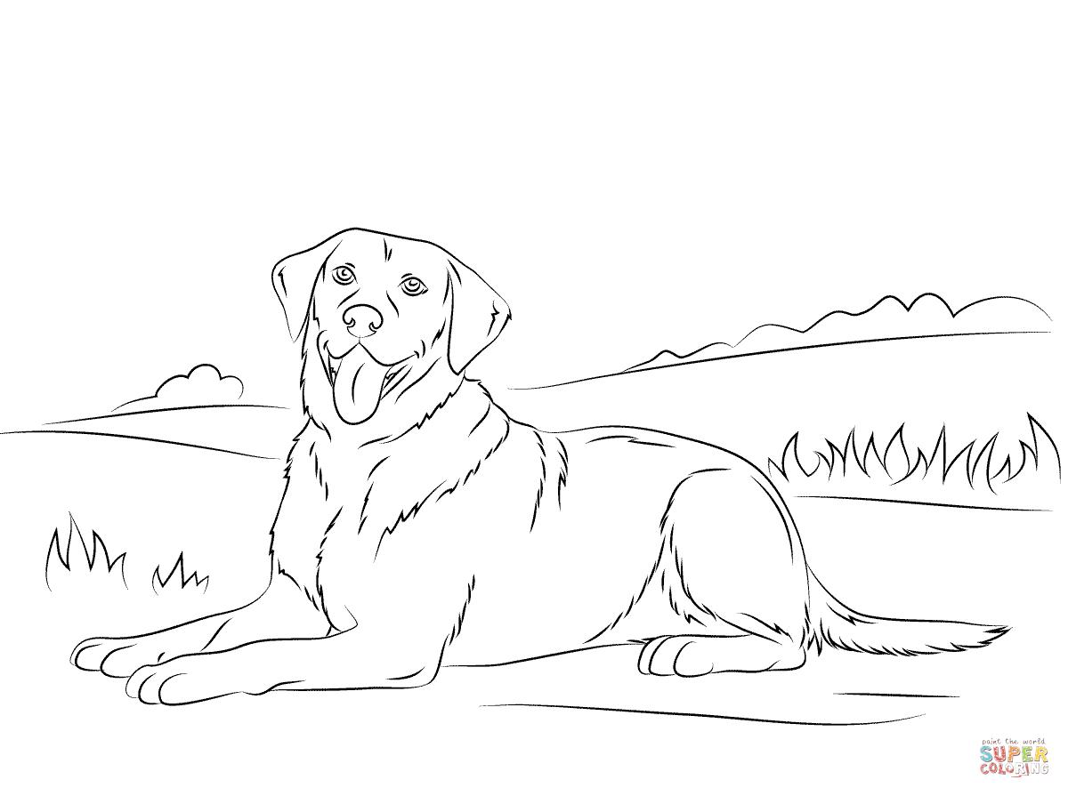labrador retriever  dog coloring page puppy coloring