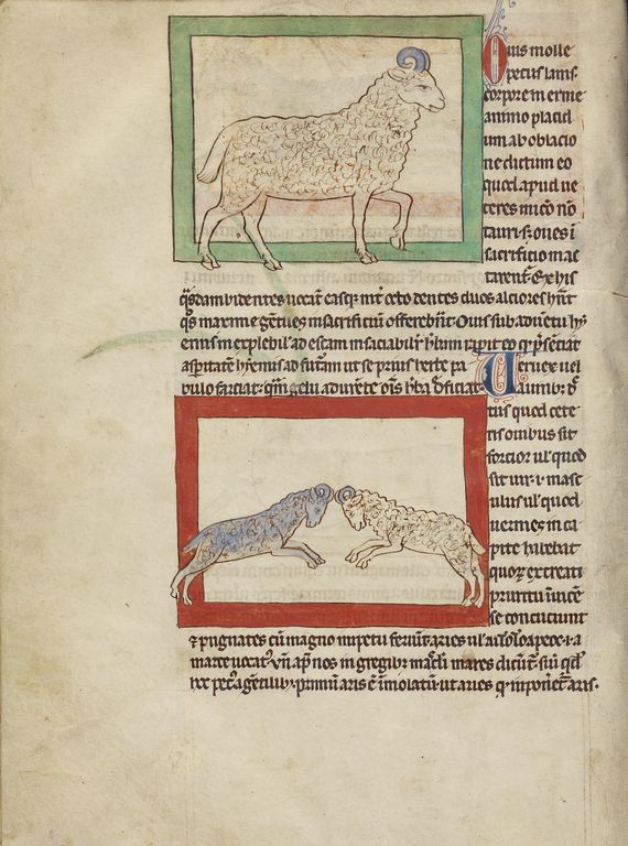 A Sheep; A Ram; Unknown; England; about 1250 - 1260; Pen-and-ink drawings tinted with body color and translucent washes on parchment; Leaf: 21 x 15.7 cm (8 1/4 x 6 3/16 in.); Ms. 100, fol. 28v