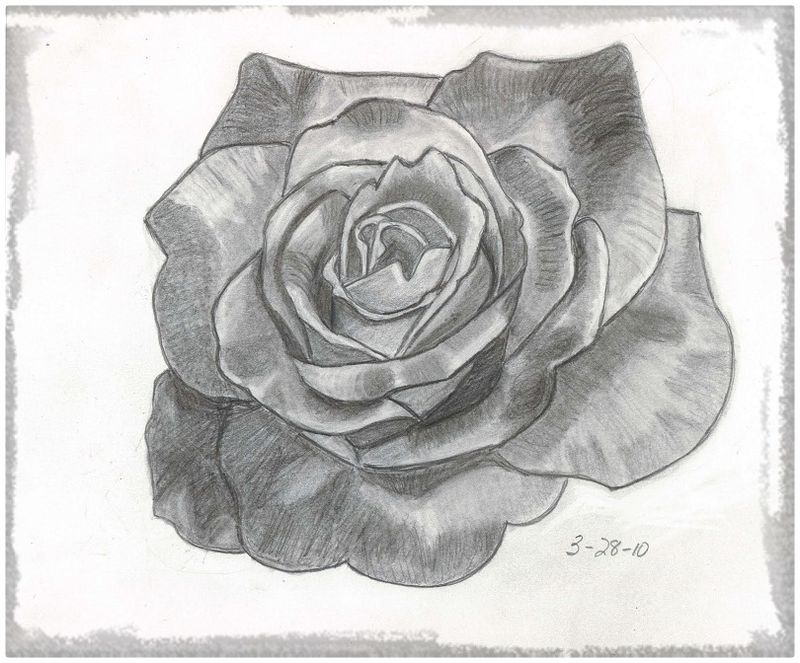 8 Mejores Imágenes De Rosas Drawings Hearts Y How To Paint
