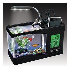 Little Fish Tank To Keep At The Office Desk! Cool