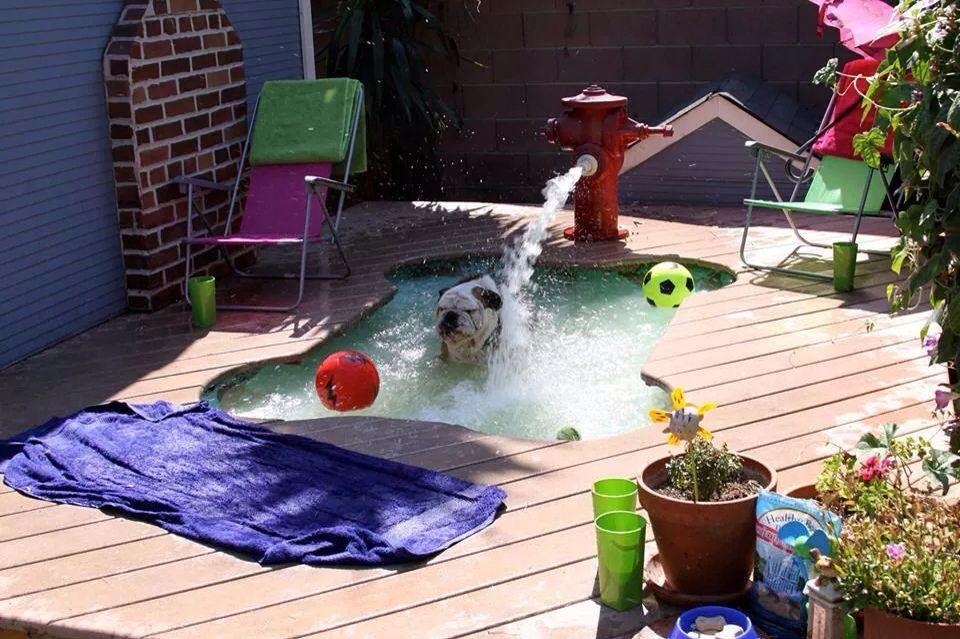 Dog Days Of Summer Dog Pool Dog Swimming Pools Diy Dog Stuff