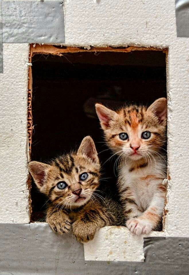 """* * """" It beez noes fun livin' feral - der are lotz more, justs like us."""""""