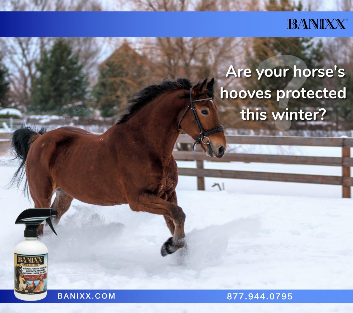 For Horses Horse Health Horses Rain Rot