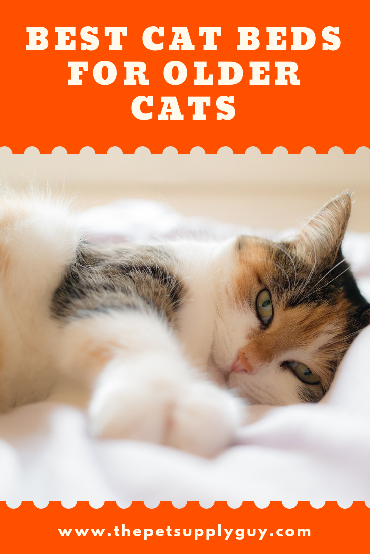Best Cat Bed for Older Cats Cats, Cat has fleas, Cool cats