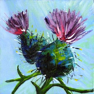 Thistles, Greeting card and Thistle flower on Pinterest