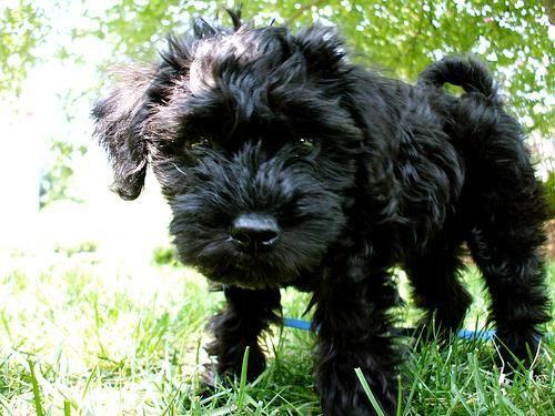 Meet XP Cupcake Denville, NJ, a Petfinder adoptable