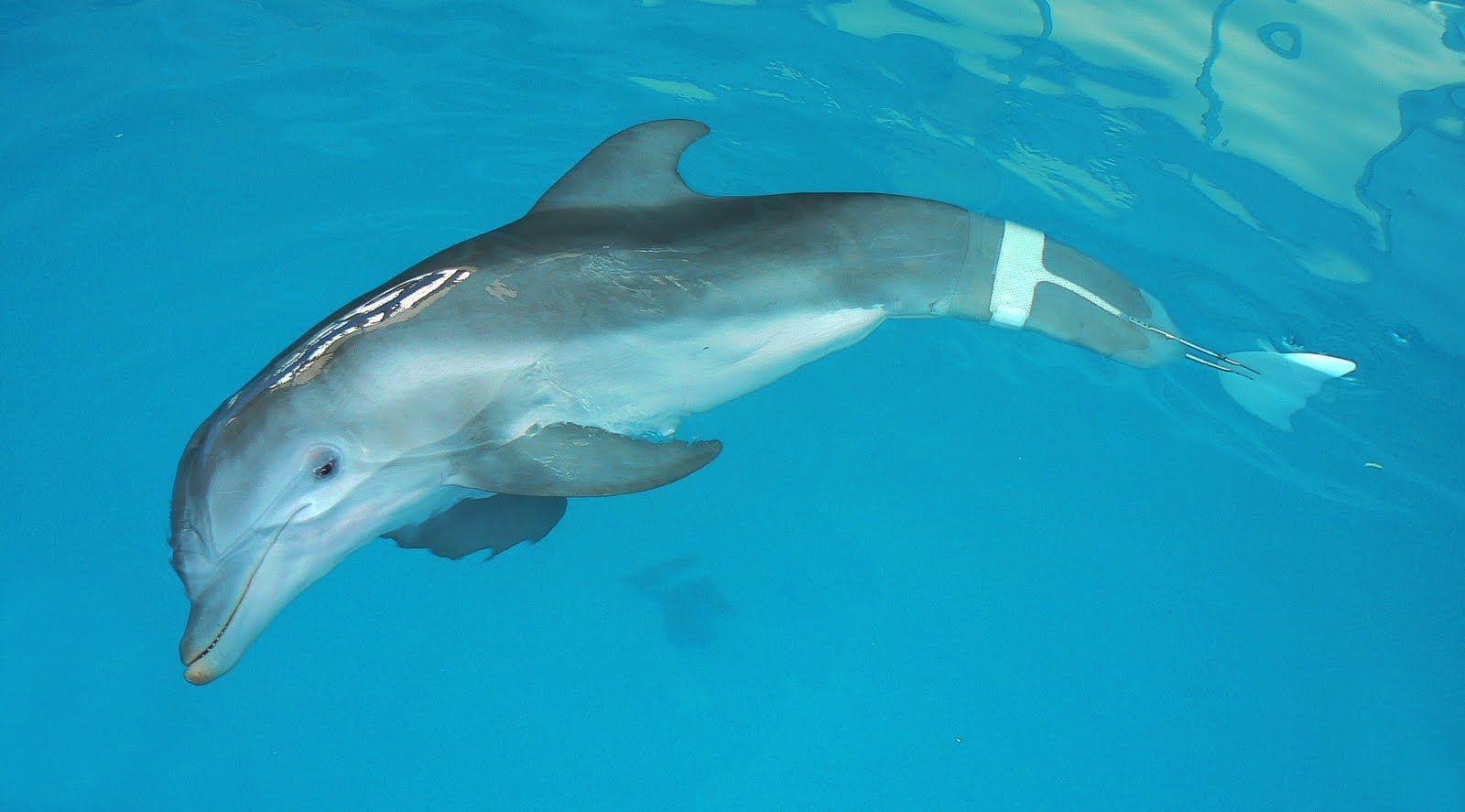 Winter delfin   Állatvilág / Fauna   Pinterest   Delfines y Animales