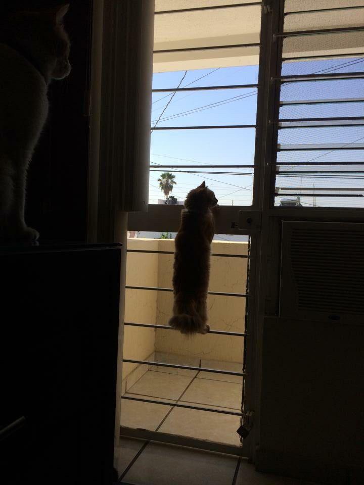 La ventana indiscreta.