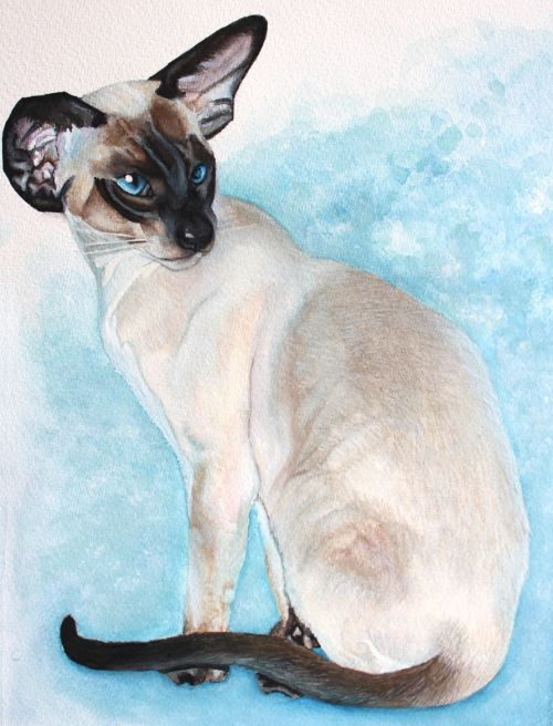 Seal Point Siamese Cat Painting