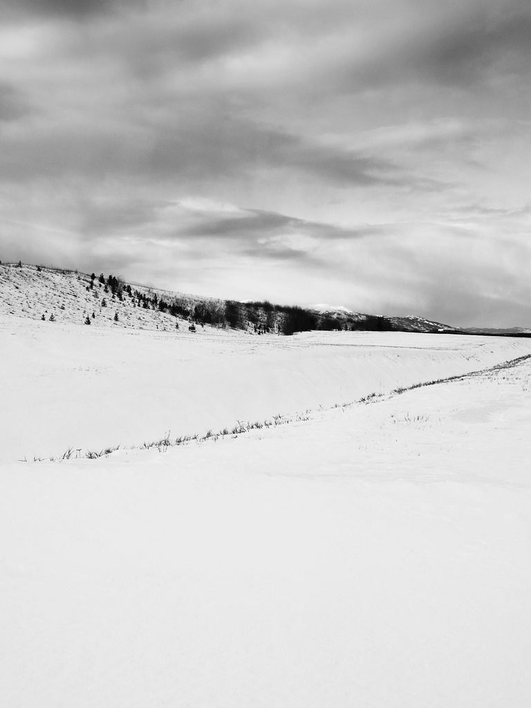 yukonchris posted a photo:  A line of grass is exposed where the wind has scoured the snow.