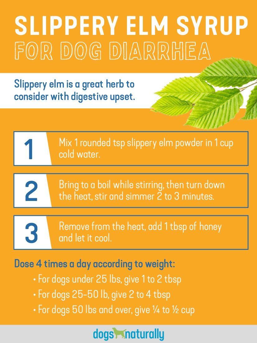 How To Stop Dog Diarrhea 4 Natural Ways To Soothe Your Dog S Stomach Diarrhea Stop Diarrhea Dogs
