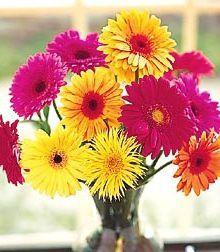 Gerber Daisy Vase by John Wolf Florist in Savannah, GA #savannah