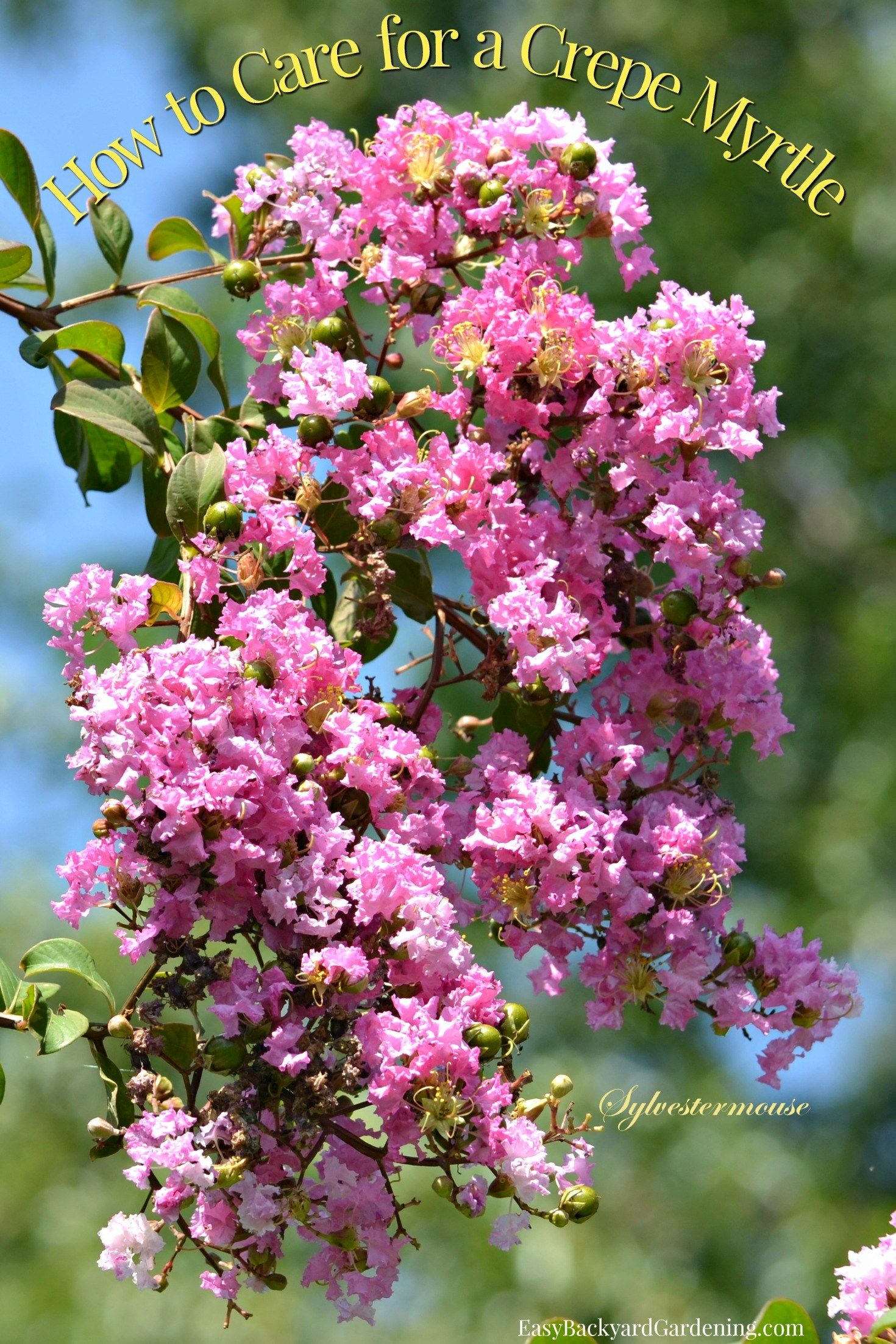 Crepe Myrtles Are Easy And Beautiful Bushes Trees Easy Garden