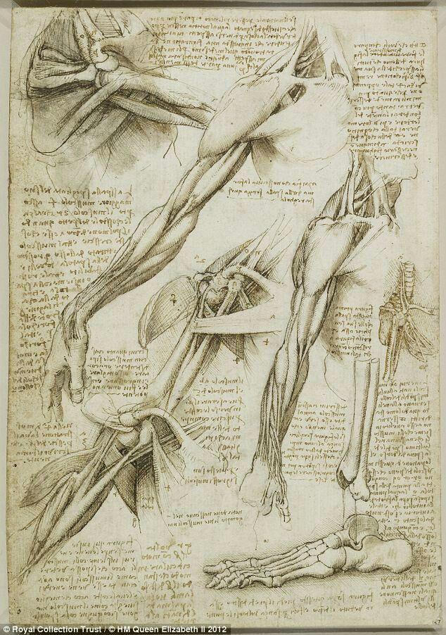 Leonardo Da Vinci Anatomical Sketchesdrawings Ca 1485 1515 My