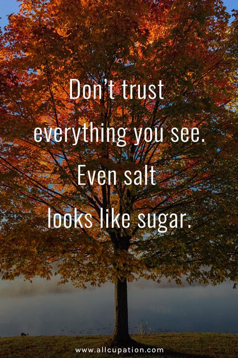 Quotes of the Day: Don't trust everything you see | The ...