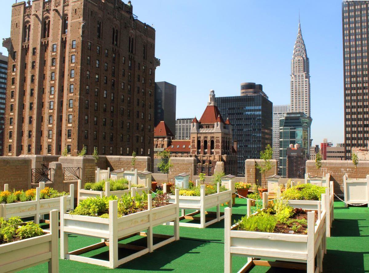 Cuán verde eres, Nueva York? | Miel, Nueva york y Terrazas