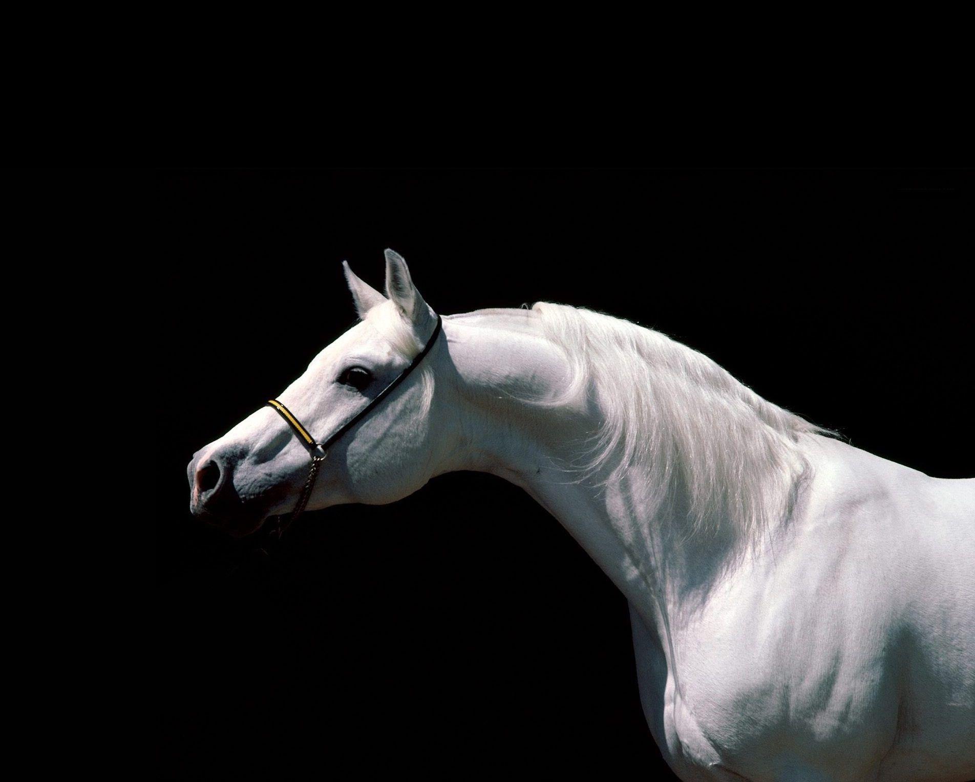 Simple Wallpaper Horse Dual Monitor - 4bd22f5b27f9ac4b81f94699d6e27d84  Trends_128481.jpg