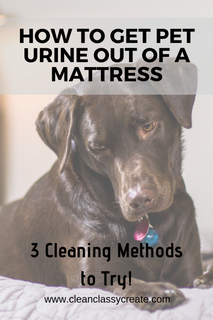 How to Get Pet Urine Out of a Mattress (3 Cleaning Methods