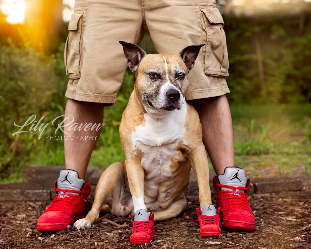 Pet Photography Tips From a Successful Dog Photographer